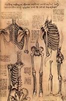 Torso_and_the_Arms_study