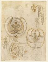 104r_Anatomical_Studies_19127r_104r