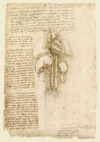 105r_Anatomical_Studies_19112r_105r