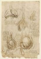 106v_Anatomical_Studies_19098v_106v