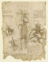 107r_Anatomical_Studies_19104v_107r