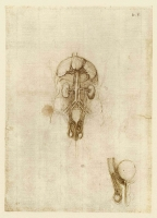 108v_Anatomical_Studies_19099r_108v