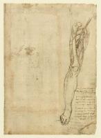 112r_Anatomical_Studies_12624v_112r