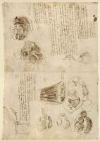 116v_Anatomical_Studies_19119v_19118v_116v