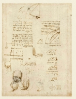 123v_Anatomical_Studies_19105v_123v