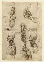 134v_Anatomical_Studies_19002v_134v