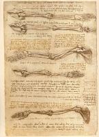 135v_Anatomical_Studies_19000v_135v