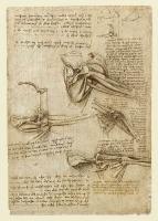 136r_Anatomical_Studies_19001r_136r