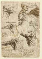 137v_Anatomical_Studies_19003r_137v