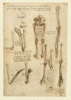 138r_Anatomical_Studies_19004r_138r