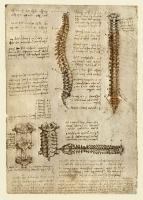 139v_Anatomical_Studies_19007v_139v