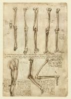 140r_Anatomical_Studies_19008r_140r