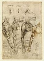 140v_Anatomical_Studies_19008v_140v
