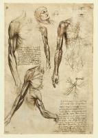 141r_Anatomical_Studies_19005r_141r