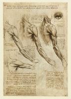 141v_Anatomical_Studies_19005v_141v