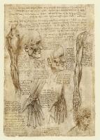 142v_Anatomical_Studies_19012v_142v