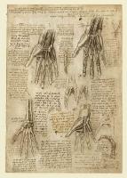 143r_Anatomical_Studies_19009r_143r