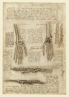 143v_Anatomical_Studies_19009v_143v