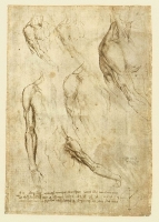 144r_Anatomical_Studies_19013r_144r