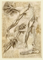 144v_Anatomical_Studies_19013v_144v