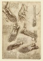 145r_Anatomical_Studies_19011r_145r