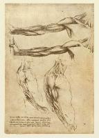 145v_Anatomical_Studies_19011v_145v