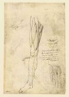 146r_Anatomical_Studies_19006r_146r