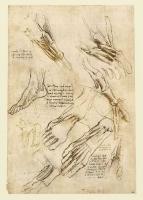 146v_Anatomical_Studies_19006v_146v