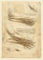 147r_Anatomical_Studies_19010r_147r