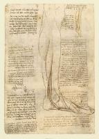 147v_Anatomical_Studies_19010v_147v