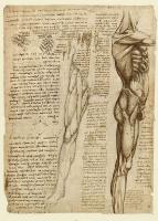 148v_Anatomical_Studies_19014v_148v