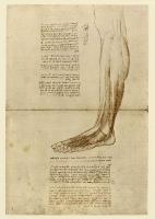 150r_Anatomical_Studies_19016r_150r