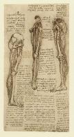 152r_Anatomical_Studies_12619r_152r