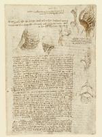 157r_Anatomical_Studies_19064r_157r