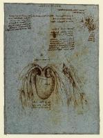 163v_Anatomical_Studies_19072v_163v