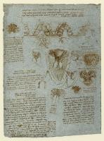 165v_Anatomical_Studies_19078v_165v