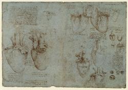 166v_Anatomical_Studies_19074v_19073v_166v