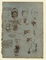 168v_Anatomical_Studies_19077v_168v