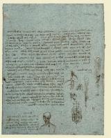 176r_Anatomical_Studies_19085r_176r
