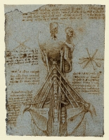 179v_Anatomical_Studies_19075v_179v