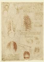 185v_Anatomical_Studies_19108v_185v