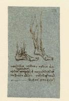 190r_Anatomical_Studies_19094r_190r