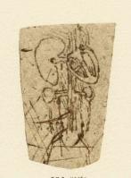 195r_Anatomical_Studies_19126r_195r