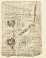 196v_Anatomical_Studies_19103v_196v