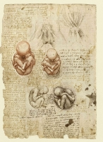 197v_Anatomical_Studies_19101r_197v