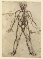 036r_Anatomical_Studies_12597r_036r