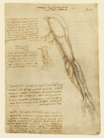 069r_Anatomical_Studies_19027r_069r