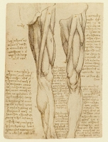 077v_Anatomical_Studies_19035v_077v