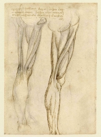 078v_Anatomical_Studies_19036v_078v