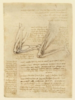 081r_Anatomical_Studies_19037r_081r
